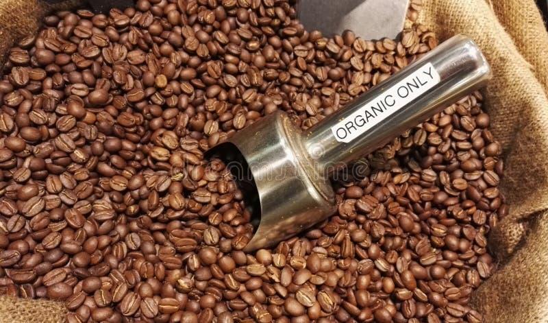 Grains de café organiques image libre de droits