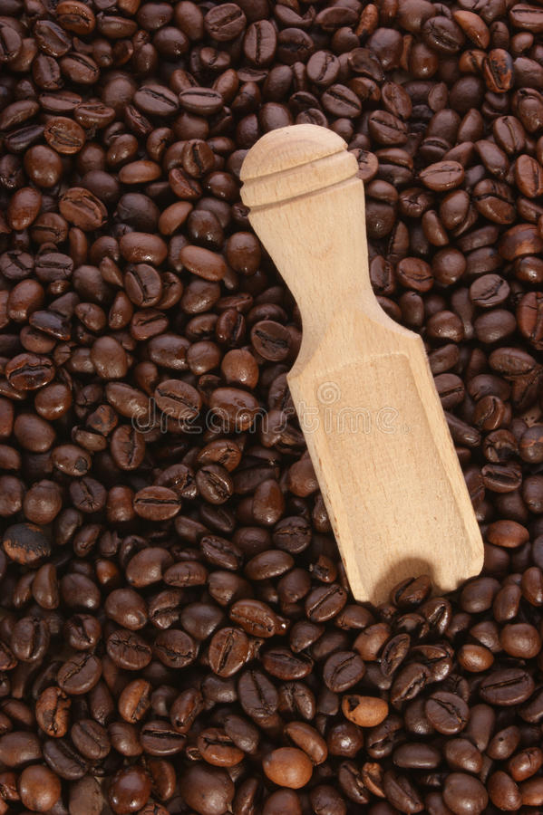 Grains de café organiques frais images libres de droits