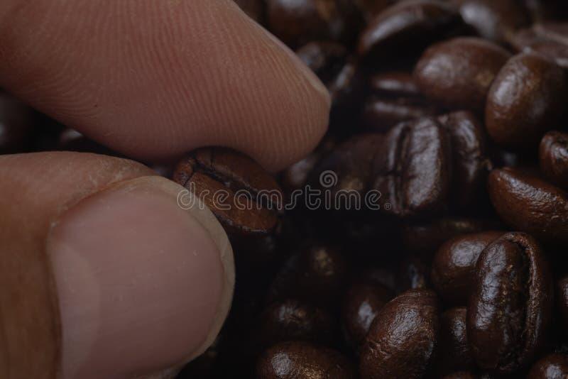 Grains de café de rôti de participation de main photos libres de droits