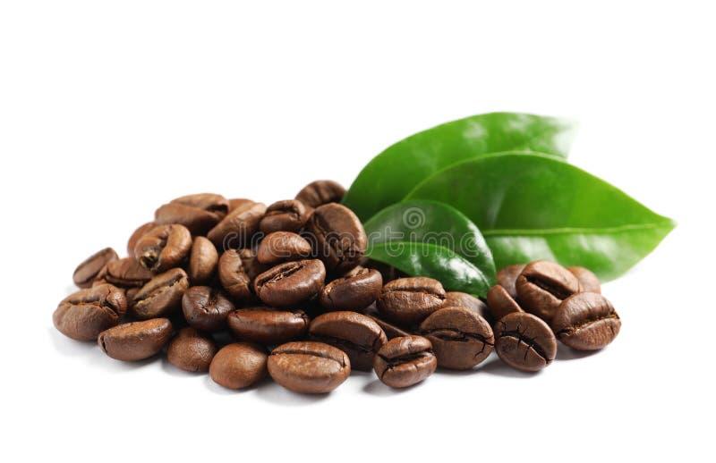 Grains de café rôtis et feuilles vertes fraîches sur le blanc photos stock
