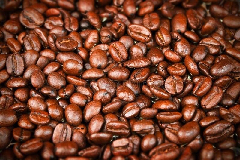 Grains de café rôtis frais, café express, Java photos stock