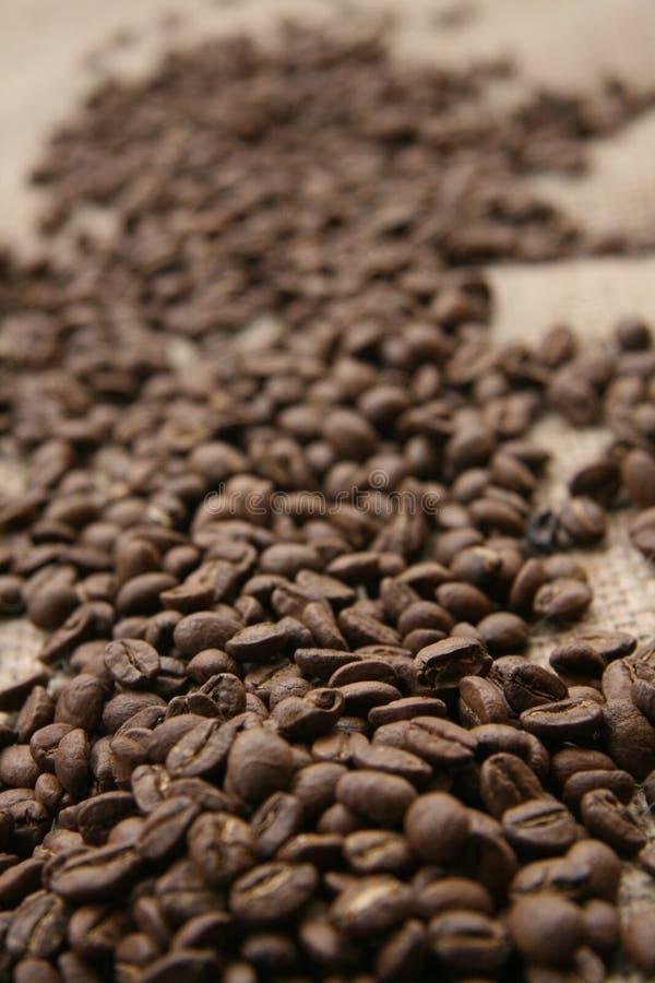 Grains de café rôtis photos stock