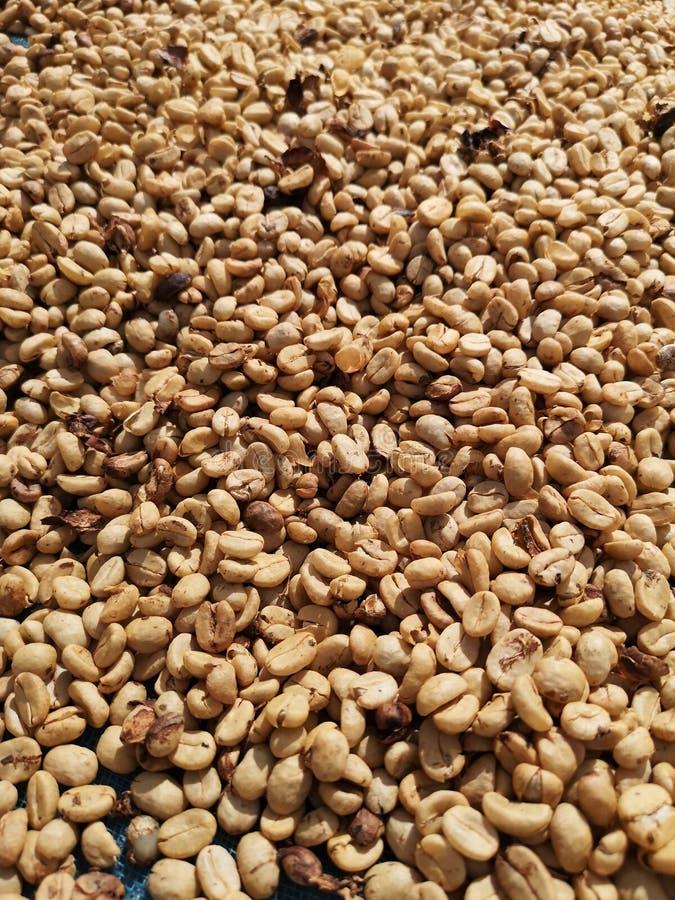 Grains de café secs organiques crus - image photos stock
