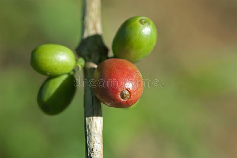 Grains de café sur la centrale image libre de droits