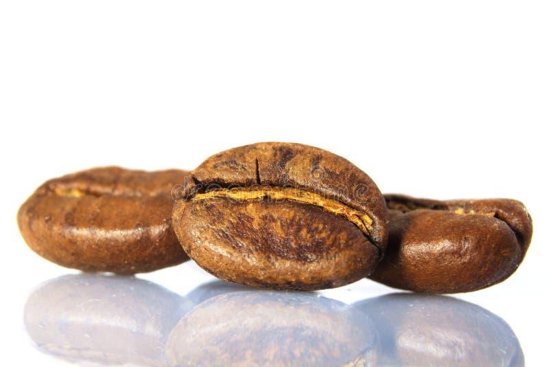 Grains de café sur le fond blanc images libres de droits