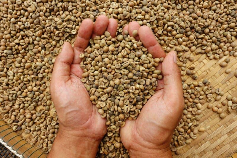 Grains de café verts photos stock