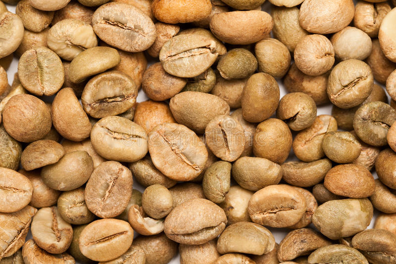 Grains de café verts secs (arabica de Coffea) photos stock
