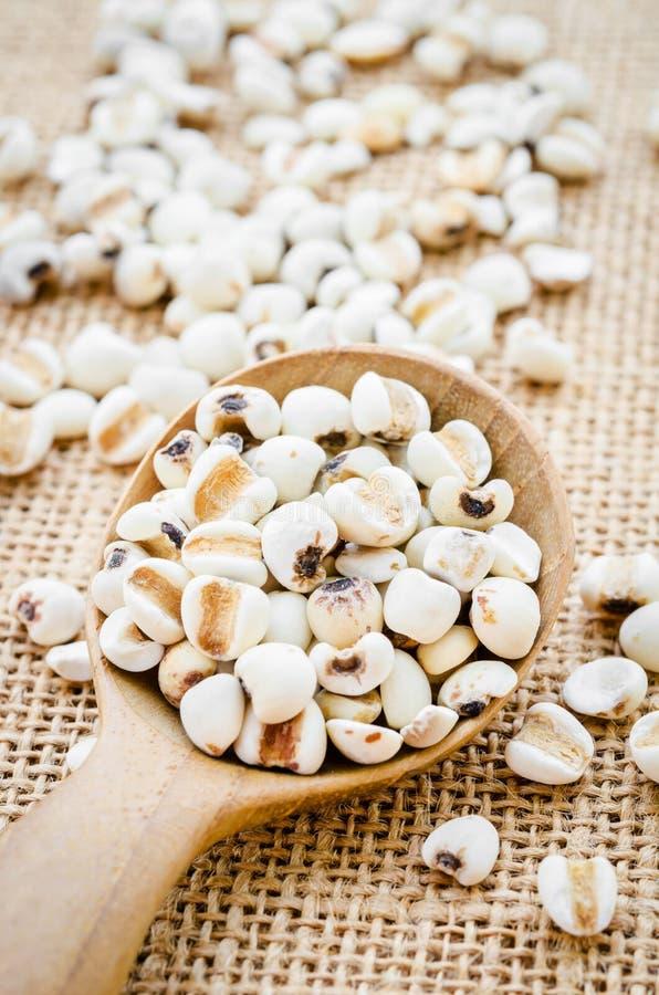 Grains de millet organiques image libre de droits