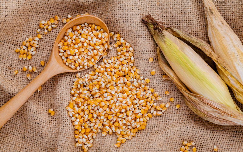 Grains of dried sweet corn in the wooden spoon with sweet corn o stock photo