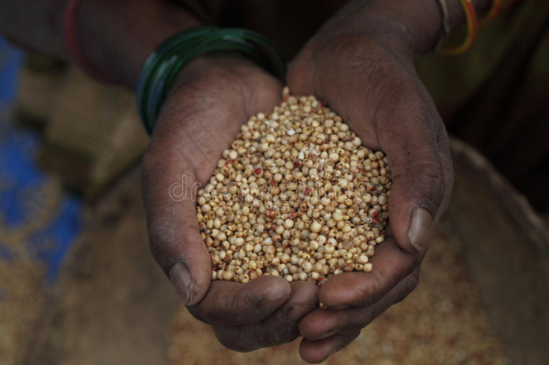 Download Grains In The Hand Of An Old Lady Stock Image - Image of farm, grains: 21991295