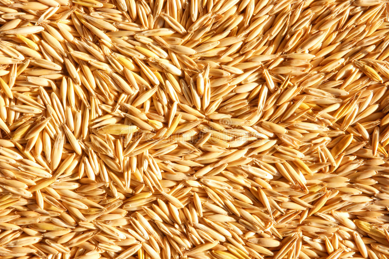 Download Grains of oat stock photo. Image of cereal, food, abundance - 8641142