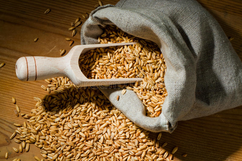 Download Grains of oats stock image. Image of plant, field, crop - 19128831