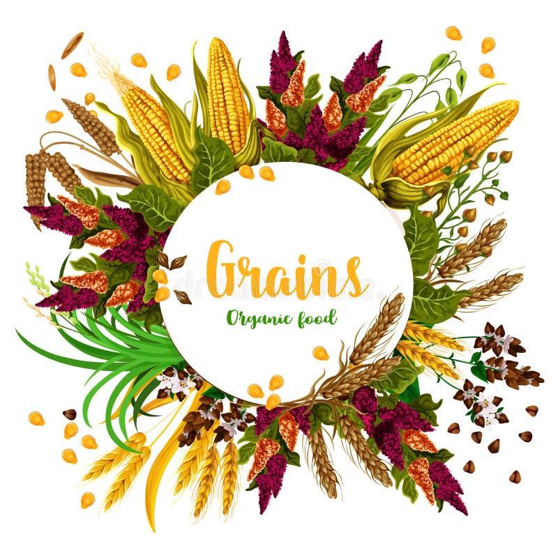 Vector grains fresh organic food poster. Grains and organic food poster of farm grown fresh and tasty organic corn, wheat and barley. Grains vector harvest of royalty free illustration