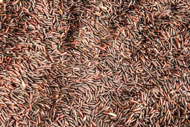 Grains organiques pourpres de riz photos stock