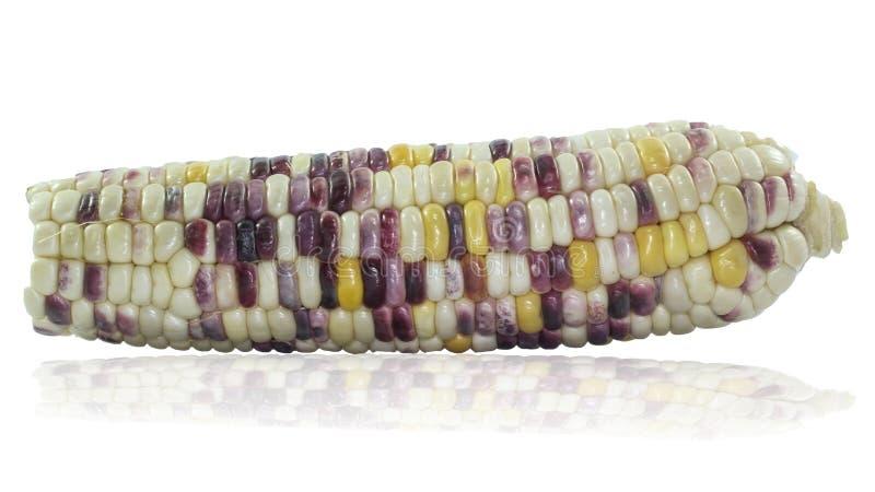 Grains pourpres de maïs photographie stock