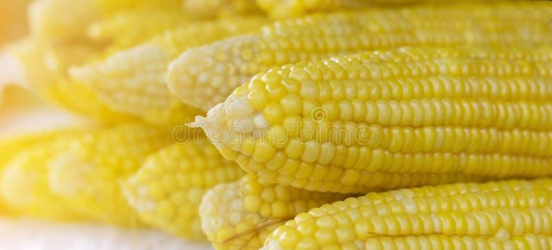Grains of ripe corn. close up corn in sun light stock photo
