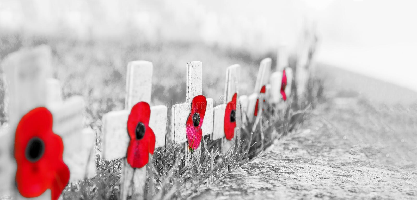 GRAINY BLACK and WHITE WITH RED POPPIES SELECTIVE FOCUS - Remembrance Day Poppies on wooden crosses, on frosty grass royalty free stock photo