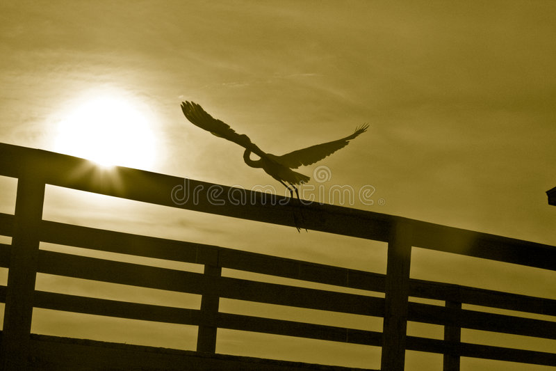 grainy heron off taking white royaltyfri foto
