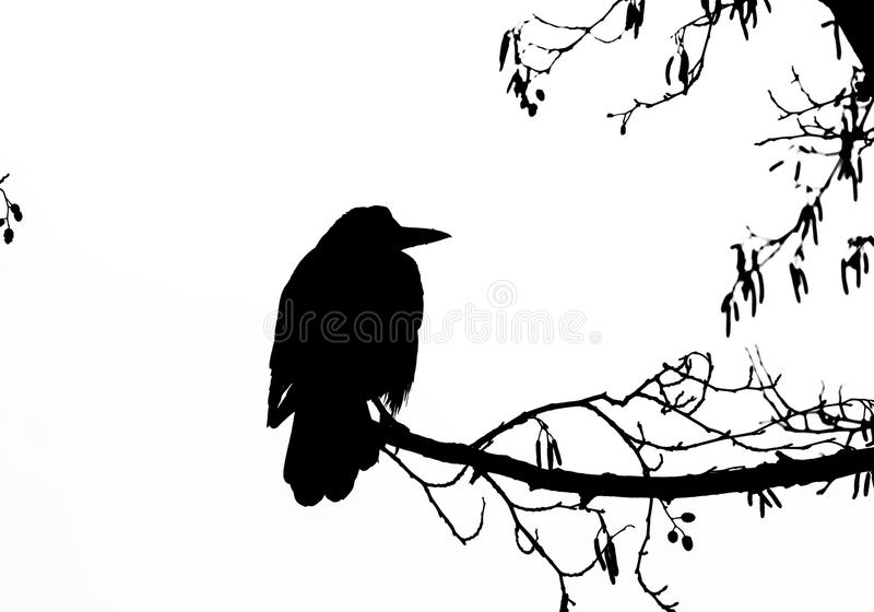 grajo libre illustration