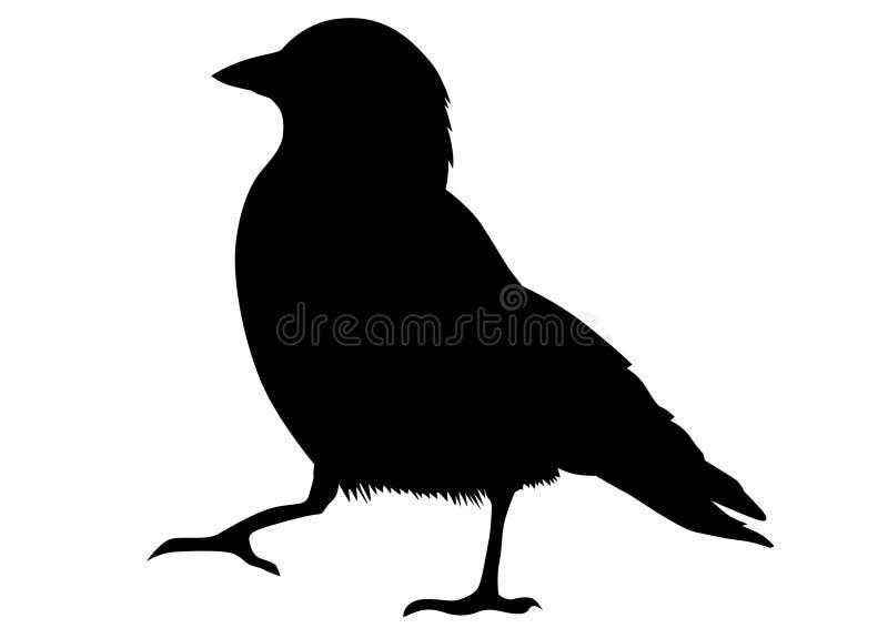 Grajo negro dos ilustración del vector
