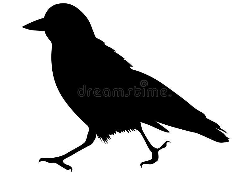 Grajo negro tres ilustración del vector