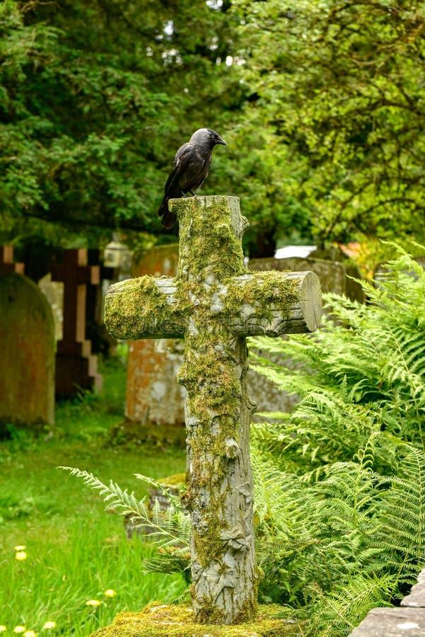 Grajo occidental un cementerio viejo que se sienta en la cruz fotografía de archivo libre de regalías