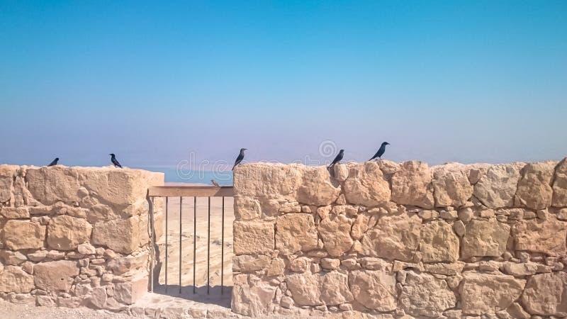 Grajos en el fondo del panorama de la fortaleza de Masada en Israel imagen de archivo