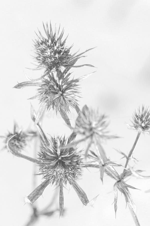 A grama é preto e branco imagens de stock