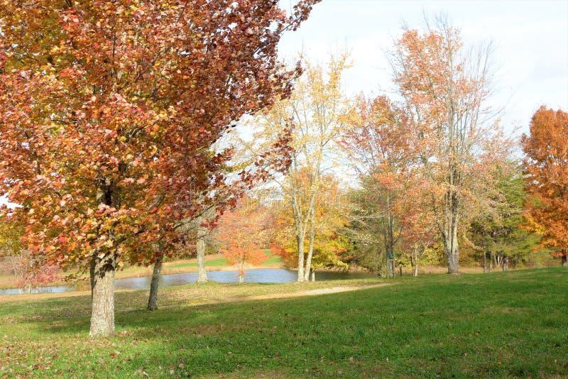 A grama é verde e as árvores são vermelhas e alaranjadas porque a queda progride foto de stock