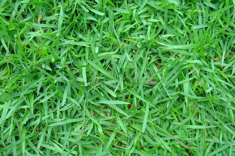 Download Grama imagem de stock. Imagem de prado, golf, parque, fazenda - 530267