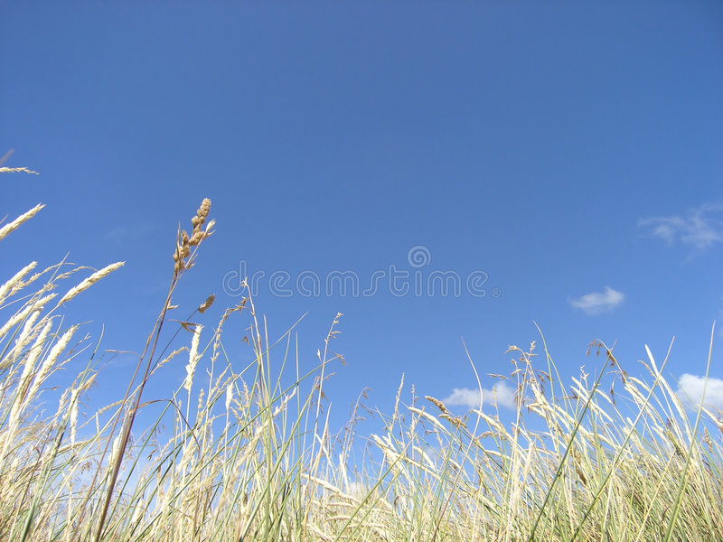 Download Grama alta imagem de stock. Imagem de grama, céu, nuvem - 60991