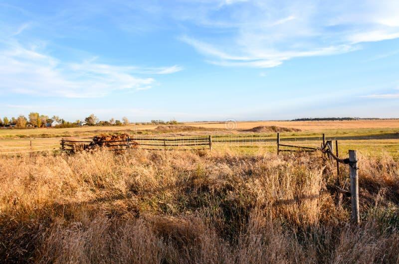 Grama alta atrás de uma cerca de madeira, uma cerca do log, um campo chanfrado fotos de stock royalty free