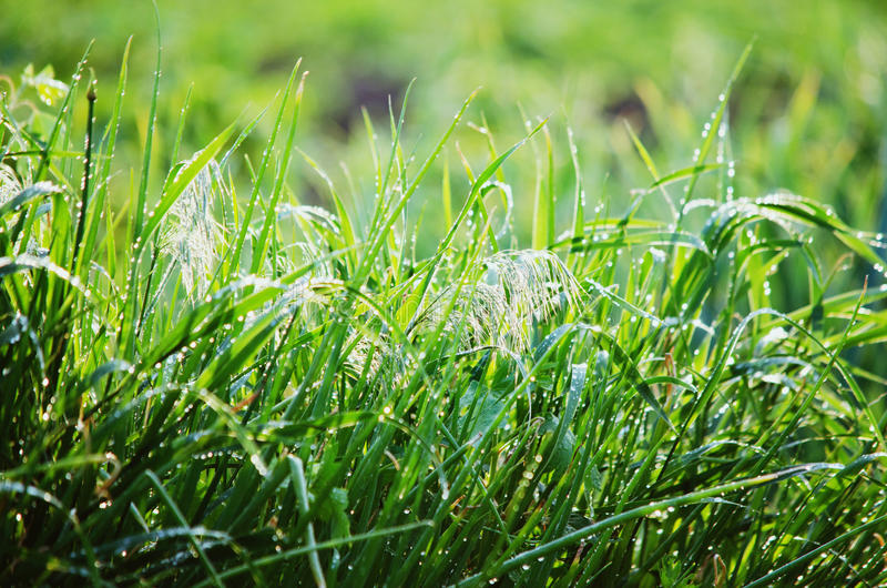 A grama após a chuva imagens de stock royalty free