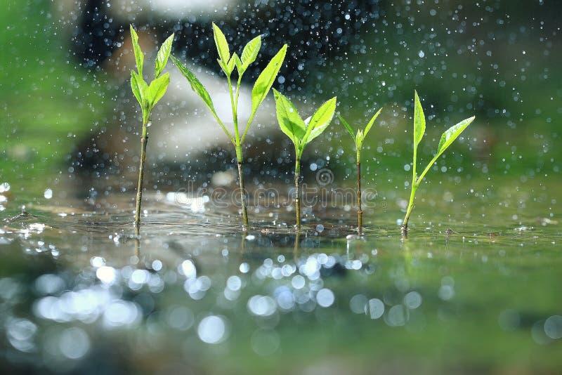 Grama com gotas da chuva imagens de stock royalty free