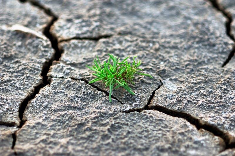 A grama cresce acima no solo seco imagens de stock