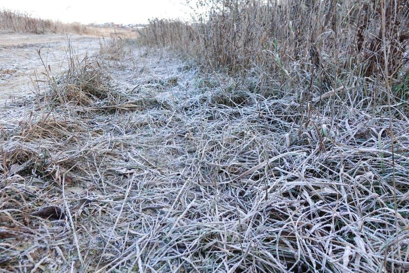 Grama da floresta coberta com a geada no tempo de inverno foto de stock royalty free