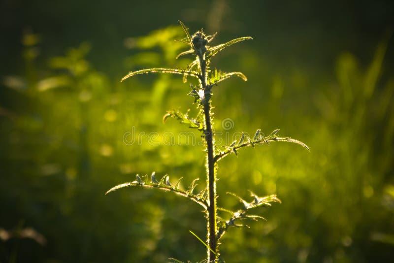 Grama da luz do sol na floresta do verão fotografia de stock