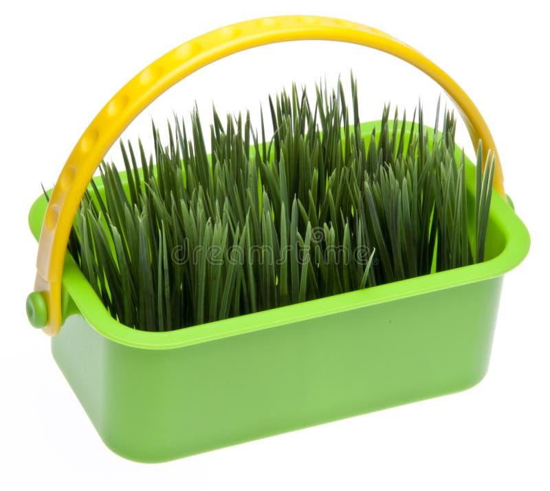 Grama da mola em uma cesta verde vibrante imagens de stock royalty free