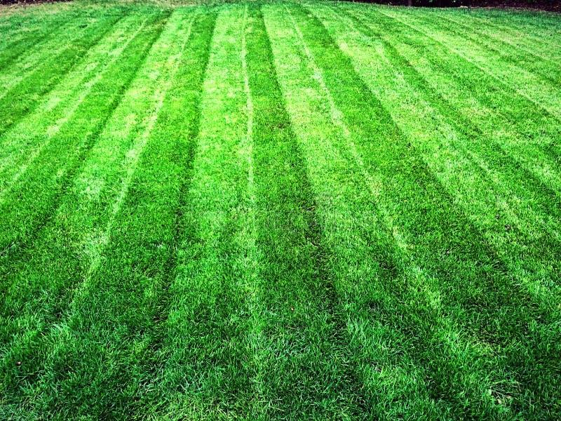 Grama da grama verde do gramado imagens de stock royalty free
