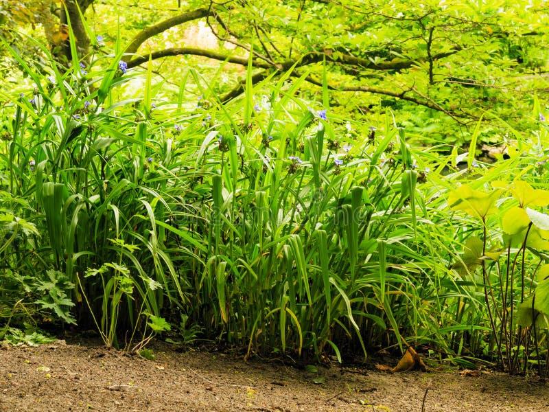 Grama das plantas verdes no parque ou no jardim exterior - Plantas verdes exterior ...