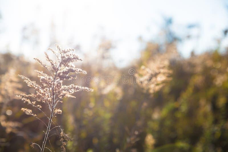 Grama de Autum no campo do prado do fundo do campo fotografia de stock