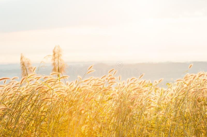 Grama de Desho na névoa sob o sol que brilha na parte superior da montanha imagem de stock royalty free