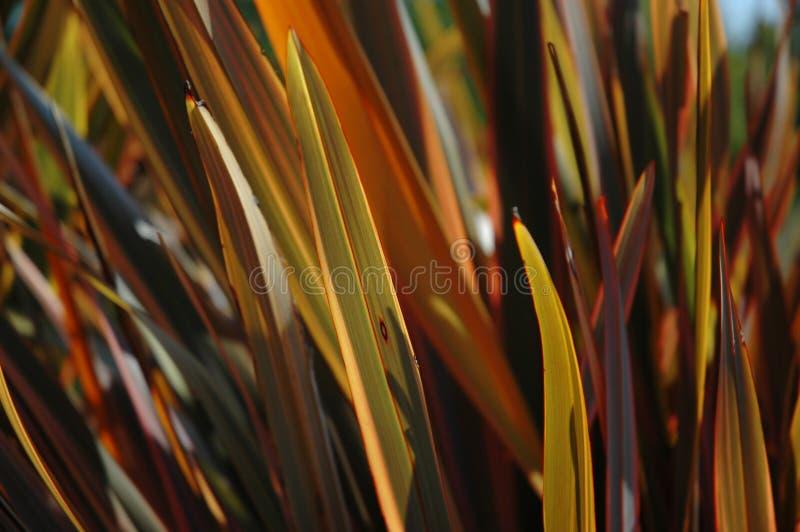 Grama decorativa retroiluminada do outono foto de stock