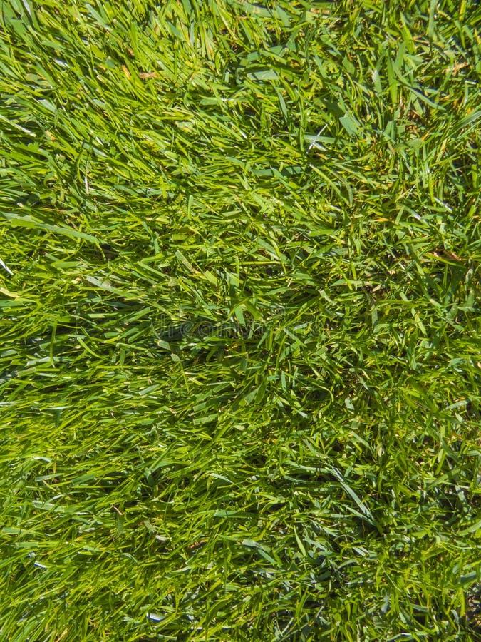 Grama do corte do verde na mola foto de stock