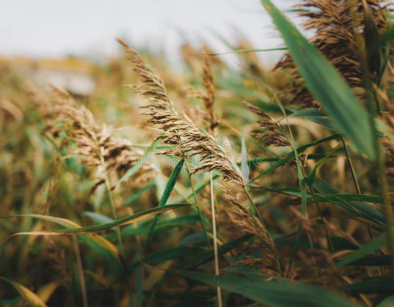 A grama do outono é já amarela e o inverno virá logo imagens de stock