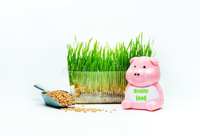 A grama do trigo brota em um recipiente plástico e em um leitão com o ALIMENTO SAUDÁVEL da inscrição imagem de stock royalty free