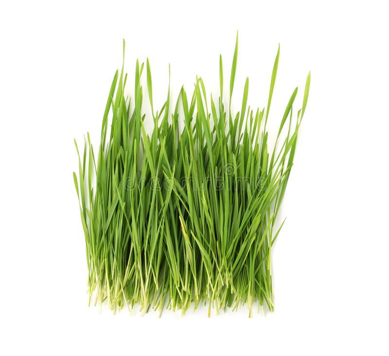 Grama do trigo na vista branca, superior fotos de stock royalty free