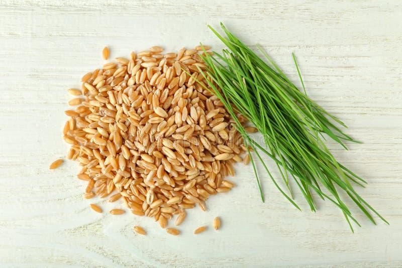 A grama do trigo semeia e brota imagens de stock