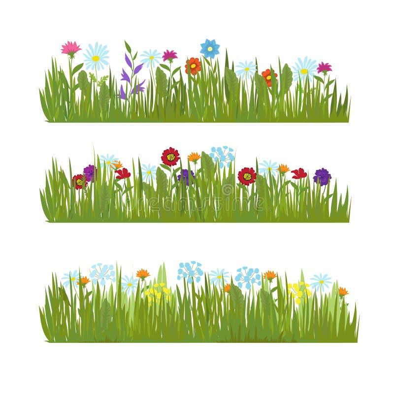 A grama do verão com as flores bonitas selvagens vector beiras ilustração do vetor