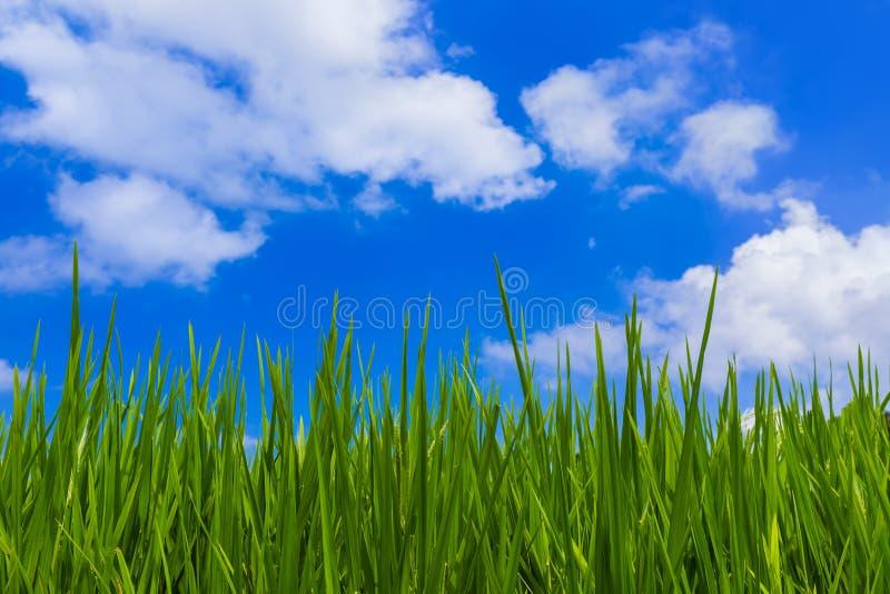 Grama e céu nebuloso fotos de stock